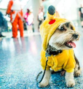 stan-lee-la-comic-con-pikachu-dog