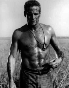 paul-newman-sexy-young